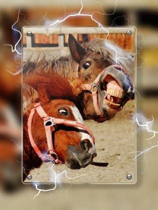 horses-1491155_1920