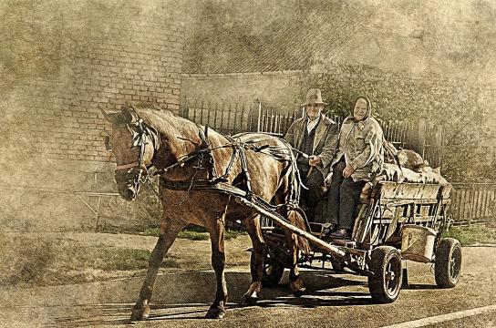 horse-2372711_1920