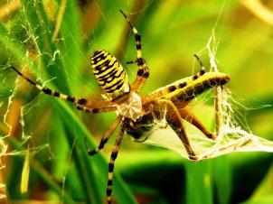spider-1605575_1920