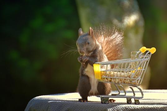 squirrel-4325694_1920